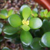 縁起のいい植物